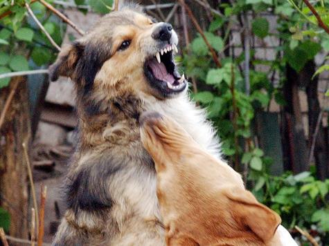 В Смоленске прохожую заживо загрызла свора собак
