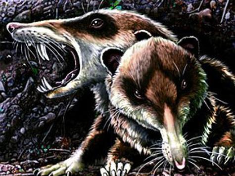 Саблезубая белка — дальняя родственница кенгуру