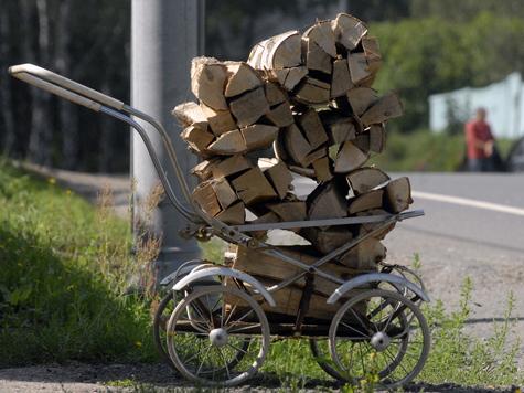 Жуки обеспечат дачников дровами впрок