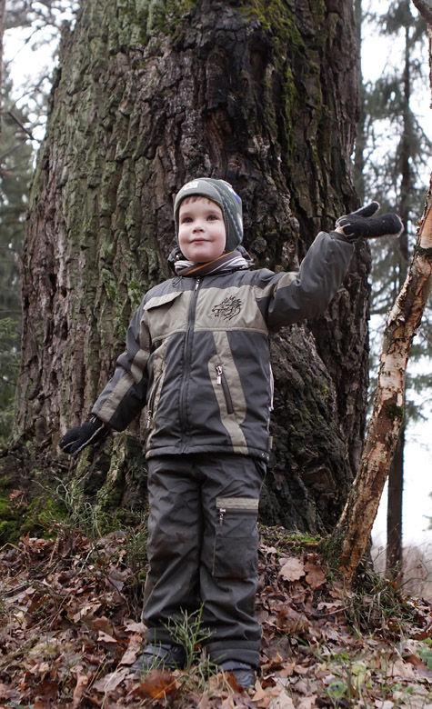 вырубка леса подмосковье красногорский район лесное хозяйство