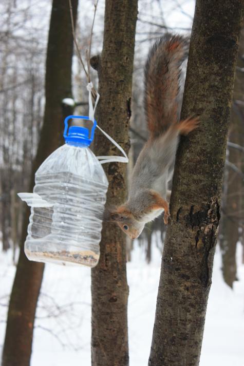 Жителям Зеленограда запретили кормить белок и ежей