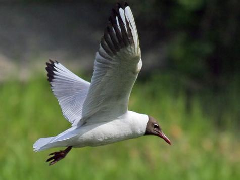 Russian Bird Russian Bird Conservation