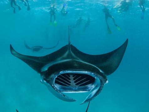 В Италии увидели гигантского морского дьявола. ВИДЕО