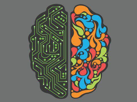 Мозг не состоит из двух полушарий - это миф, уверяют специалисты