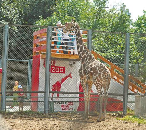 Вы когда-нибудь хотели посмотреть в глазу жирафу?