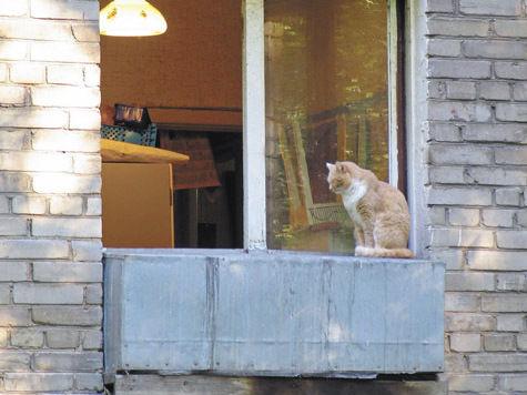 В квартире кошке недокладывают мяса!