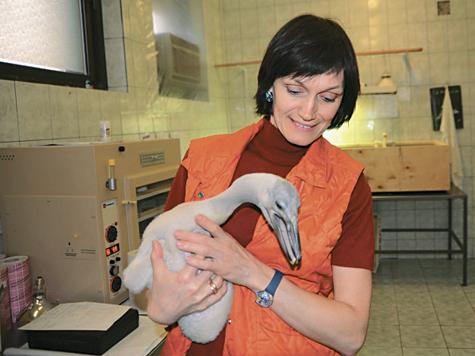 Любовь на птичьих правах