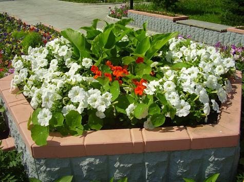 С новыми растениями и в другом дизайне