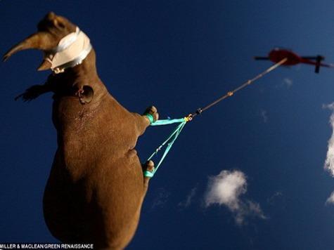 В Африке полностью вымерли носороги