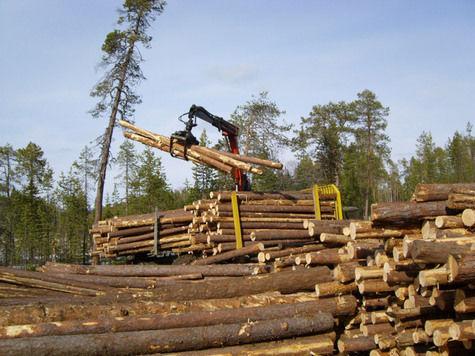 """Крупнейший арендатор лесного фонда Республики Карелии холдинг  """"Кареллеспром """" планирует к концу 2013 года в 3 раза..."""