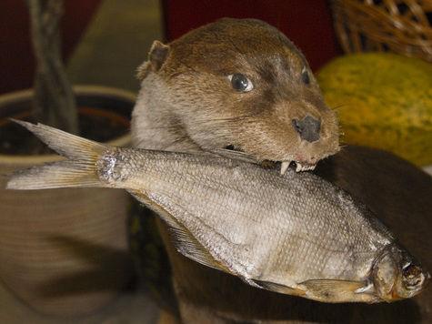 Ученые развенчали миф о пользе рыбы для интеллекта