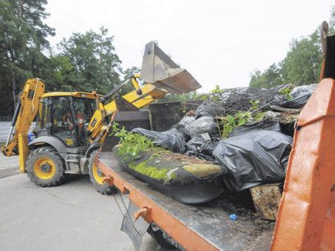 Виноградовский лес стал чище на 8 тонн мусора