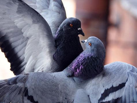 Самые красивые птицы на земле 27 фото