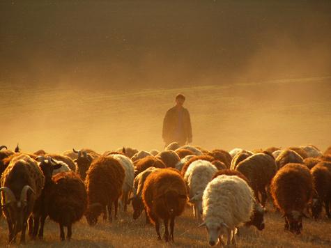 У пастухов будет свой профессиональный праздник