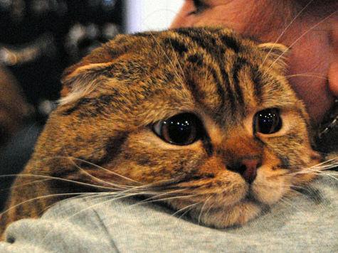 Москвичи усыпляют домашних любимцев из-за отпуска
