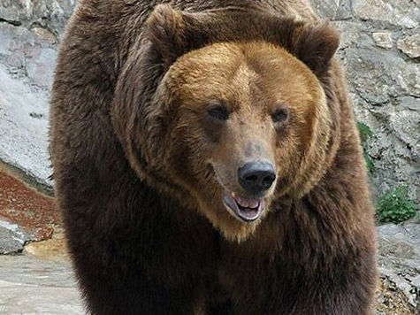 Житель Якутии убил медведя ножом