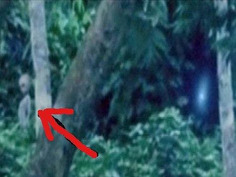 Инопланетянина сняли на ВИДЕО в амазонских джунглях