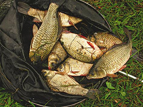 рыбалка в мошорино