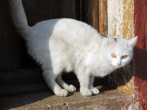 Кошки смогут попадать излечебницы прямо вгостиницу