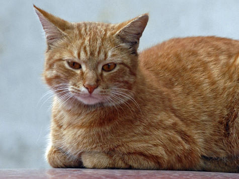 В Подмосковье бешеная кошка искусала шестерых дачников