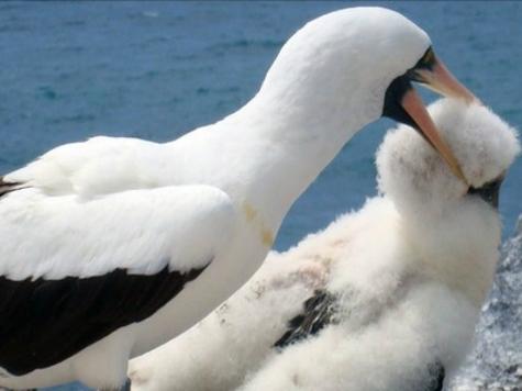 Орнитологи получили первое свидетельство «цикла насилия» в животном мире