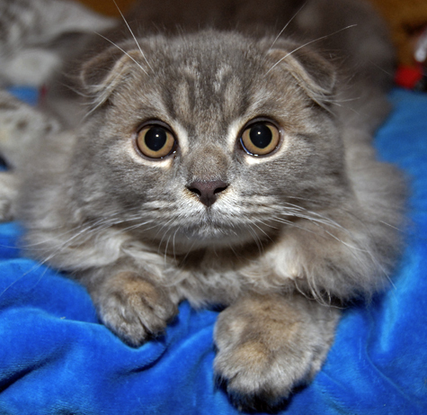 Москвичка казнила кошку за убийство попугая