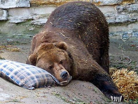 Жители Новосибирского зоопарка начали выходить из спячки