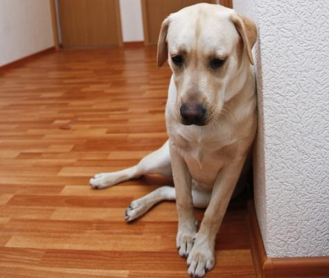 Собак выгонят из тамбура в купе