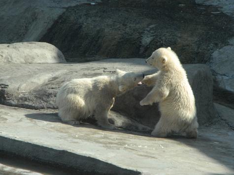 Новорожденный обманул зоологов писком