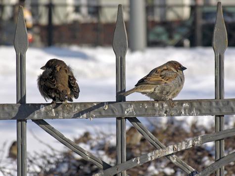 Морозы подкорректировали график прилета птиц в Москву