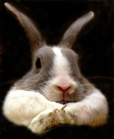 С «зайцами» в поездах станут путешествовать особые инспектора
