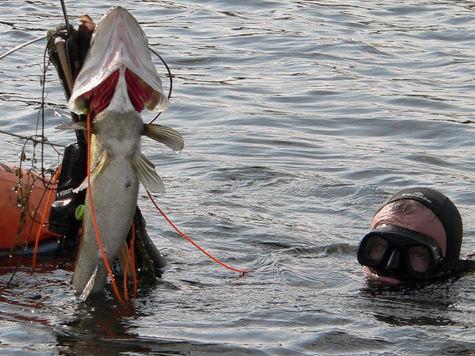 Водолазы станут ездить за рыбаками по пятам