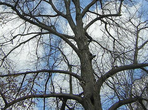 200-летние деревья будут жить