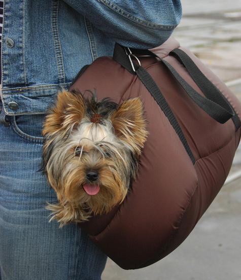 По Москве начали угонять собак