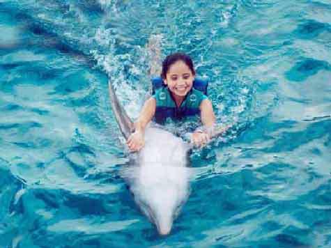 Революция морали: Ученые предлагают применить права человека к дельфинам