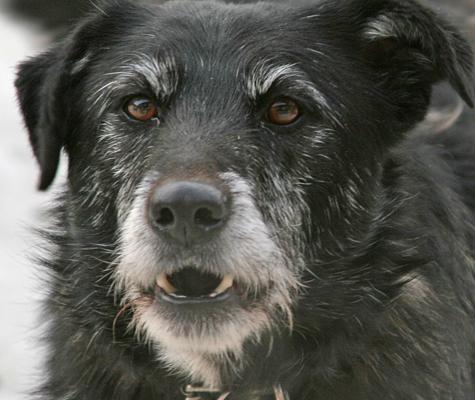 Бешеного пса остановили погоны