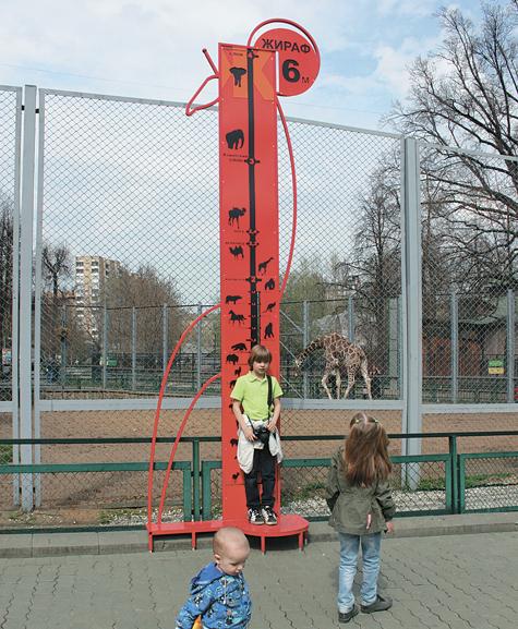 В зоопарке можно помериться ростом с жирафом