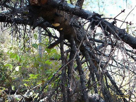 Вину за смерть рабочего прораб взвалил на дерево