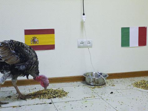 Индюк думал-думал — ив Испанию попал!