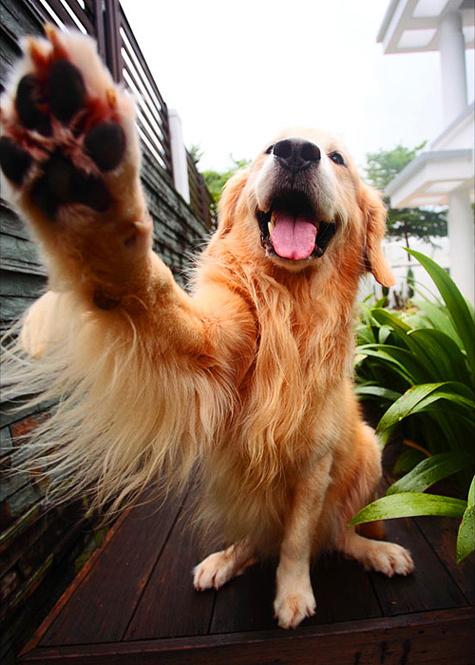 Любовь к собакам стала для ветерана превыше здоровья соседей