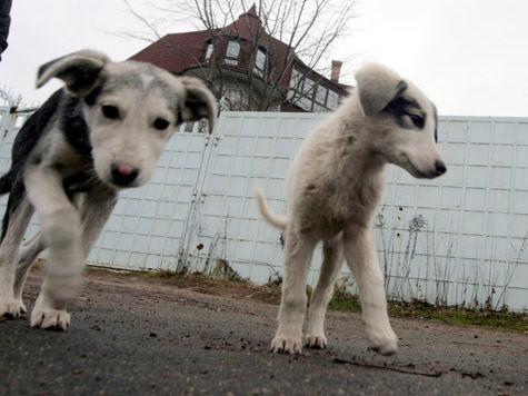 Убийства бездомных животных закрепят законодательно?