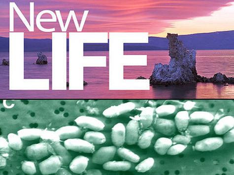 Исследователи создали и опровергли альтернативную жизнь