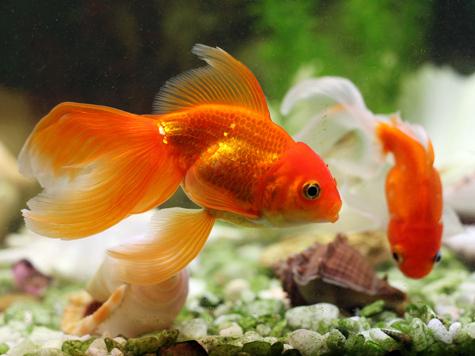 Толстякам не советуют отдавать ноги на съедение рыбам