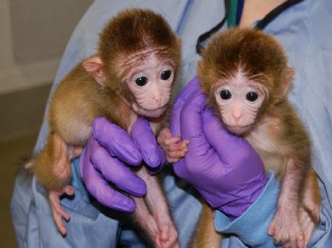 Генетики создали настоящих химер