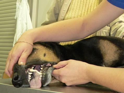 Раковые заболевания у собак обнаружит фотосессия