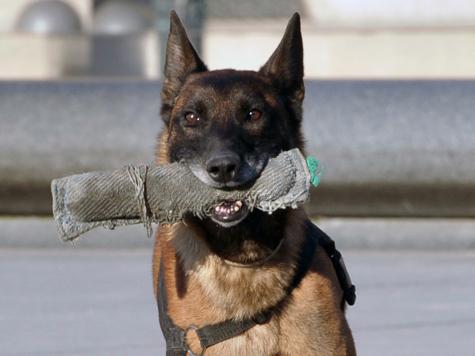 Собак будут пускать в самолеты наравне с пассажирами