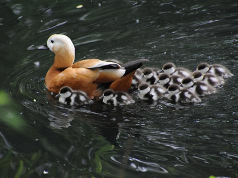 Мамы приводят детей в зоопарк после первого полета