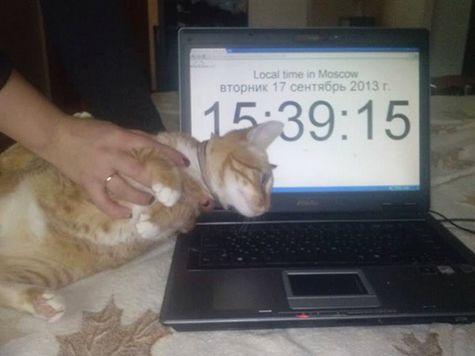 В Москве взяли в заложники кота по кличке Навальный