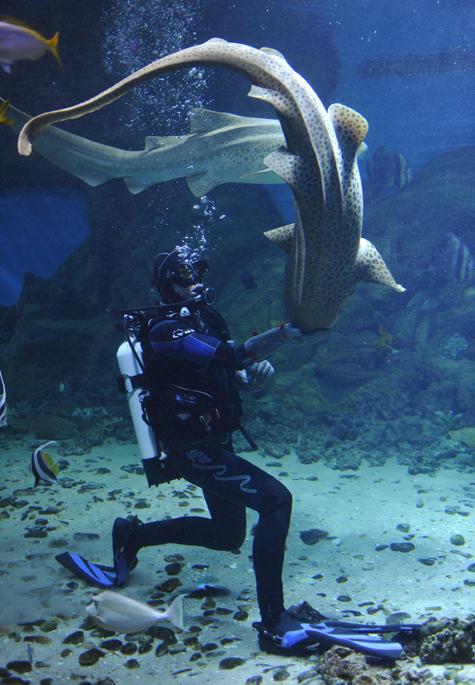 Московский дайвер научился кормить акул с руки