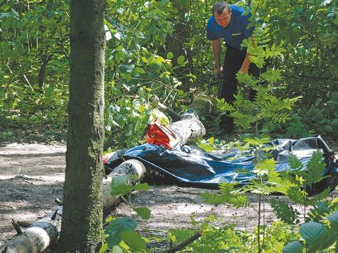 Упавшее дерево в парке убило малыша
